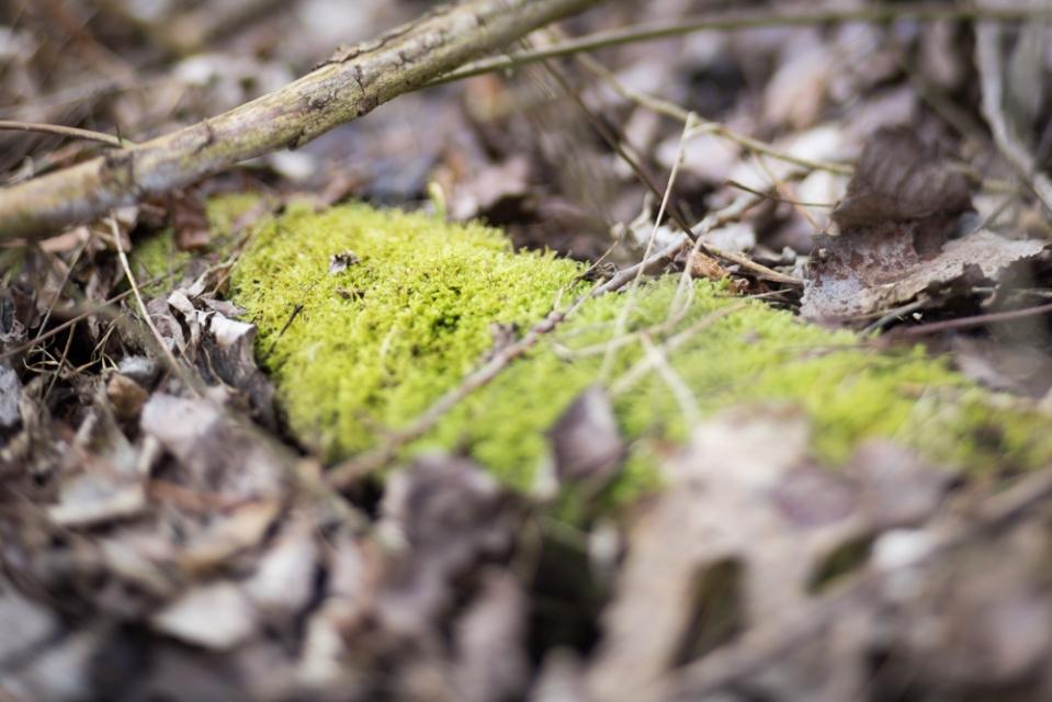 winterwood_mlg_photography-11