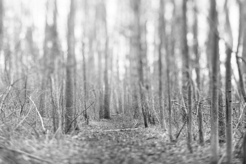 winterwood_mlg_photography-14