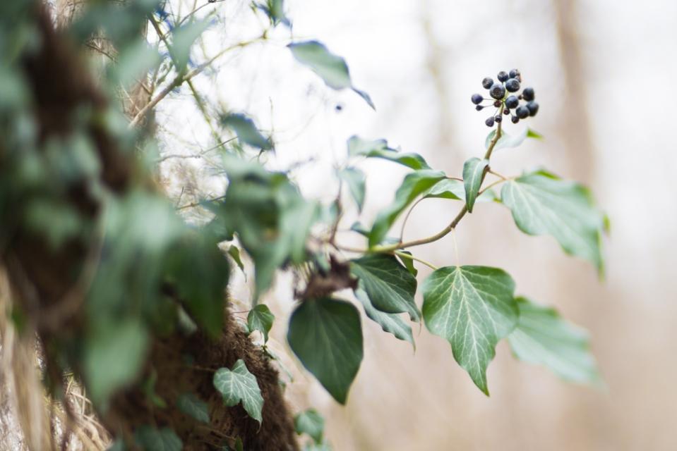 winterwood_mlg_photography-9